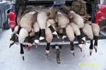 walnut creek hunt geese